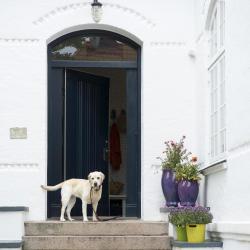 hund entré blå dörr vitt putshus
